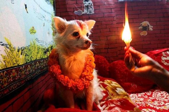 11.10.15 - Kukur Tihar Festival in Nepal2
