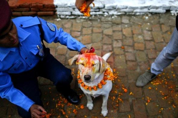 11.10.15 - Kukur Tihar Festival in Nepal3