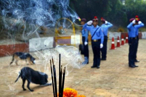 11.10.15 - Kukur Tihar Festival in Nepal5