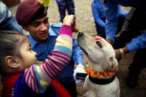 11.10.15 - Kukur Tihar Festival in Nepal6