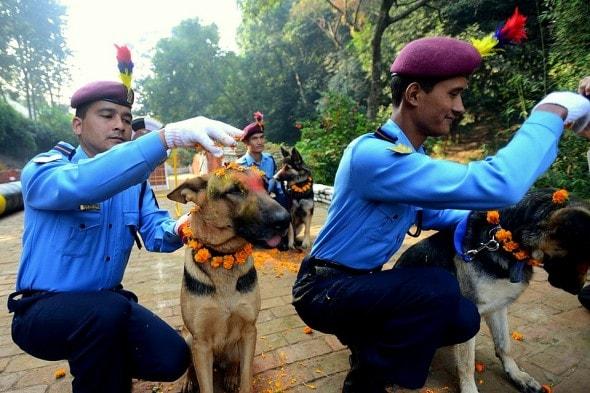 11.10.15 - Kukur Tihar Festival in Nepal8