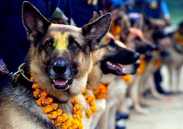 11.10.15 - Kukur Tihar Festival in Nepal9