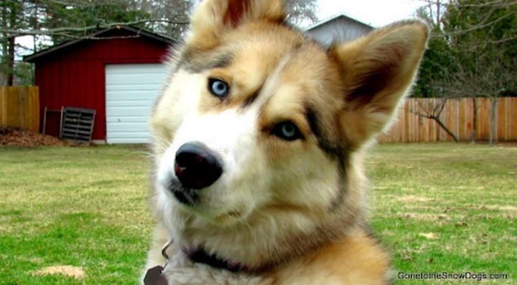 how to teach a dog to tilt head