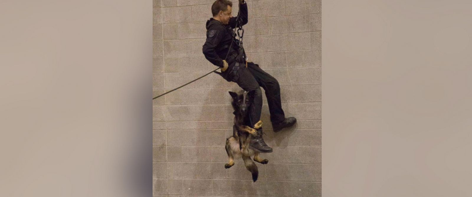 Police Dog Photographed on First Repelling Training