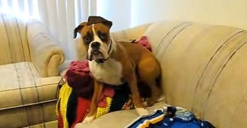 Boxers Who Are Scared of the Most Ridiculous Things
