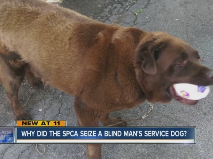 SPCA Removed Service Dog from Blind Man for Neglect