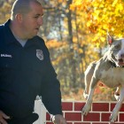Pit Bull Becomes Police Department's Newest K-9