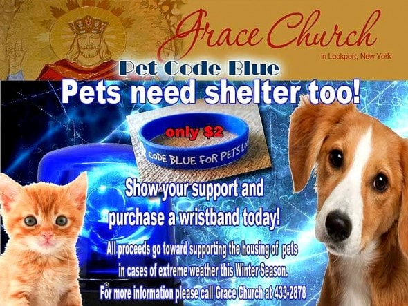Donations for pets in need can also be made online