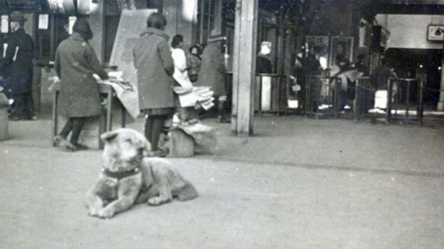 81yearold rare photo of the famous hachiko found