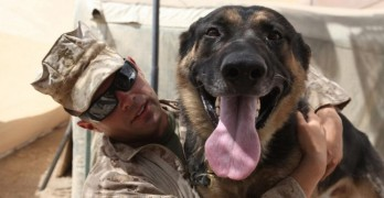 Specially Trained Dog Seeks Out Soldiers in Distress