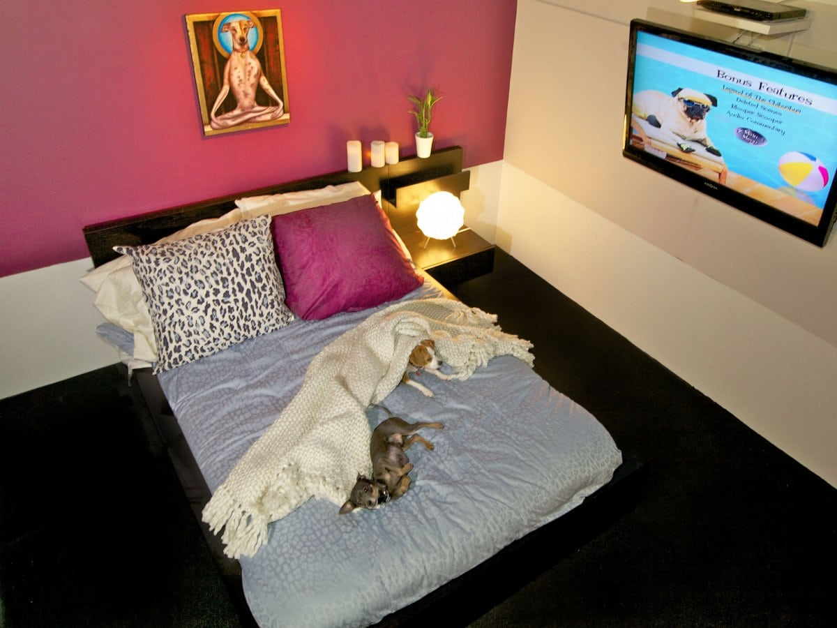 Nyc dog hotel has accommodations for your dog for Luxury extended stay hotels nyc