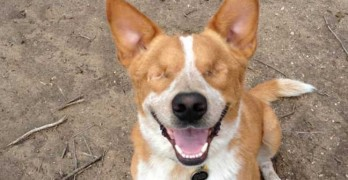 Special Needs Dog from Tucson Needs a Home