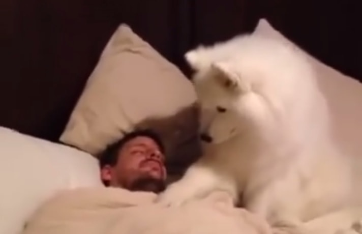 The Best and Cutest Way to Be Woken Up