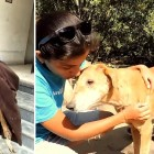 A Dog Goes Down into a Basement to Die… But Is Brought Back up Alive
