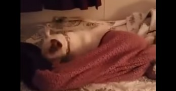 Seven-Year-Old Rescue Dog's First Time Ever on a Bed