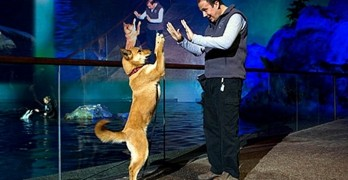 Chicago Aquarium Adopts Rescue Dogs, Because They Care About Land Mammals, Too!