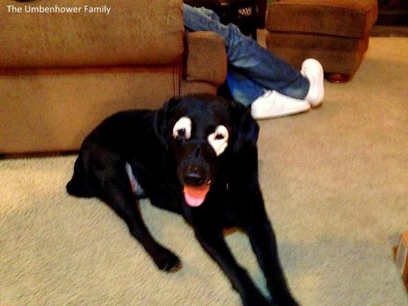 11.19.15 - Unique-Looking Dog Causes a Sensation2