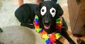 Dog with Unique Condition Causes a Sensation