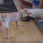 Cats and Dogs Learning How to Live Together