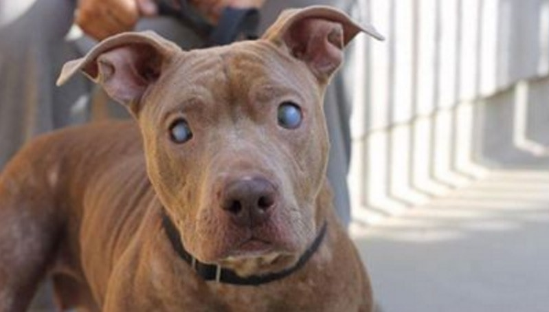 Blind Dog Abandoned On Park Bench Gets Rescued Life With