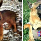 11.20.15 - Russia Sending France New Police Dog1