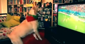 Dog Does Goal Celebration Dance Better than Humans