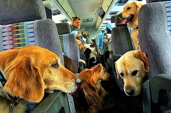 11.21.15 - Delta Will No Longer Make Pets Fly as Cargo1