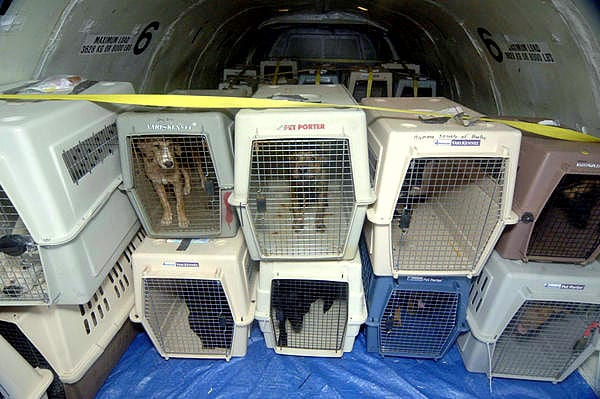 Delta will no longer make pets fly as cargo for Air travel with dog in cabin
