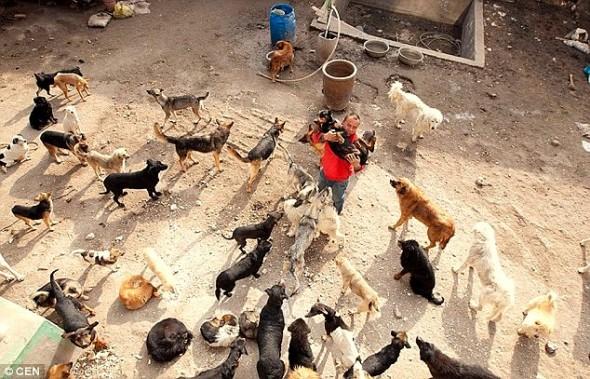 11.21.15 - MIllionaire Goes Broke Saving Dogs Destined for Slaughterhouse2