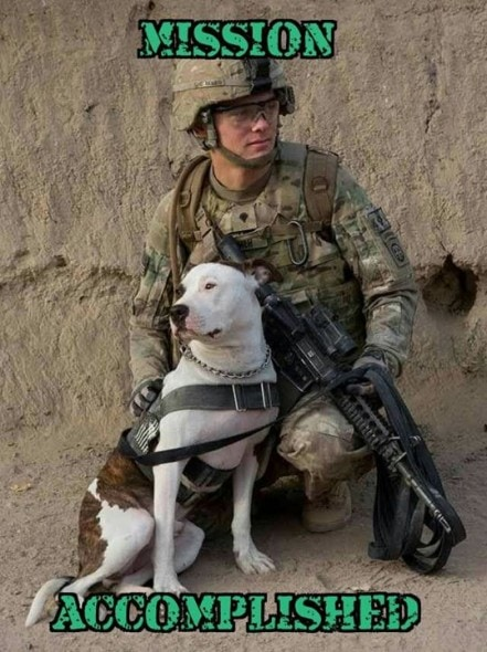 update  retired military dog reunited with soldier he