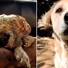 "11.25.15 - Astonishing Recovery of Dog Turned to ""Stone""0"