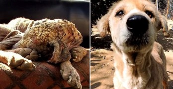 "Astonishing Recovery of Emaciated Dog Turned to ""Stone"""