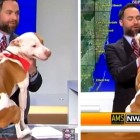 Rescue Dog Showers Meteorologist with Love