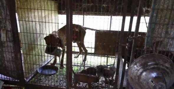 11.25.15 - dog meat farm2