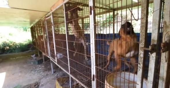 11.25.15 - dog meat farm3
