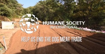 The Destruction of a Dog Meat Farm in South Korea