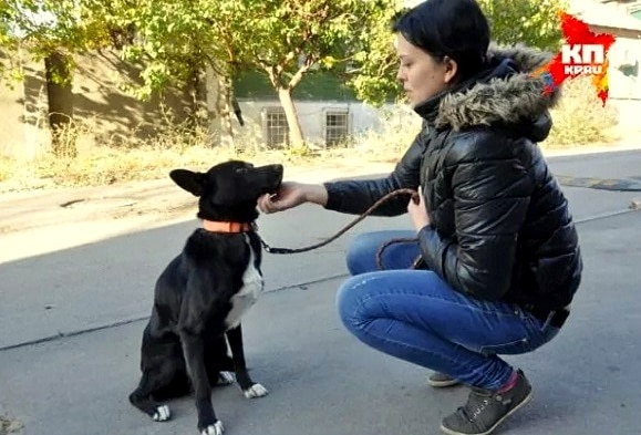 11.26.15 - Dog Walks 200 Miles to Find the Woman Who Saved Her Life11
