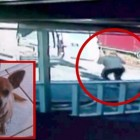 PETA To Be Sued for Theft and Murder of a Family's Dog