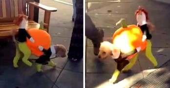 Adorable Little Dog in Thanksgiving Costume