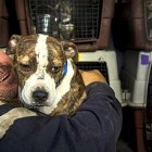 11.27.15 - Man Spends Half of His Year Driving to Save Dogs0