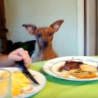 Dog Dancing for Their Thanksgiving Dinner