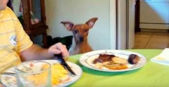 Dog Dancing for Their Thanksgiving Dinner