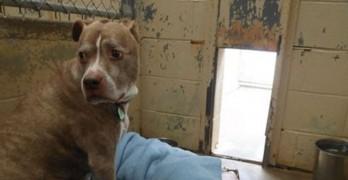 Senior Dog Left Homeless Because Family Remodeled