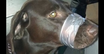 Police Flooded with Calls After Photo of Dog Surfaces on Social Media