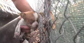 Homeless Dog Gives Birth on College Campus and Gets Rescued