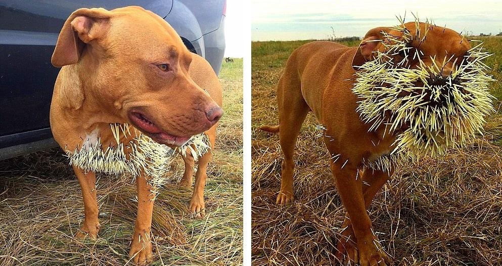Dog Training Saskatchewan