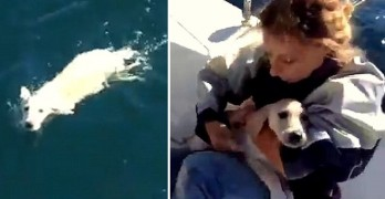 Italian Sailors Save Puppy Stranded in the Gulf of Naples