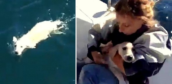 11.5.15 - Italian Sailors Save Puppy Stranded in the Gulf of Naples2