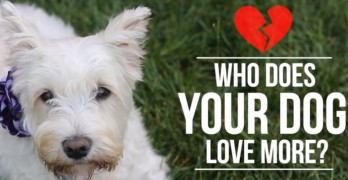 Solving the Age Old Issue of Who Your Dog Loves More