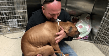 Teenagers Call Police and Save Bait Dog Left for Dead